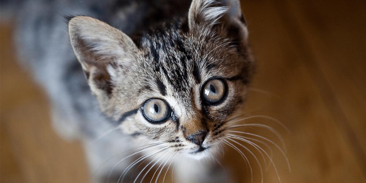 اضرار القطط على الحامل والبنات