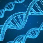 الكروموسومات والحمل