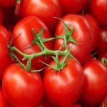 السعرات الحرارية للطماطم