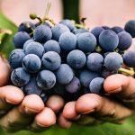 فوائد العنب للحامل في الاشهر الاولى
