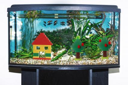 طرق سهلة لعمل حوض سمك زينة