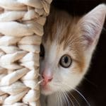 علاج فطريات القطط