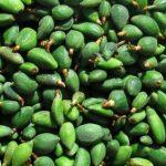 فوائد اللوز الأخضر لمرضى السكري وأهميته لضبط معدلات الكولسترول في الجسم