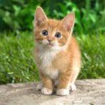 تفسير رؤية القطط في المنام للمتزوجة والعزباء لابن سيرين