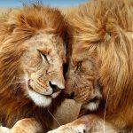 تفسير رؤية الحيوانات في المنام للعزباء ودلالة ظهور الحيوانات الأليفة