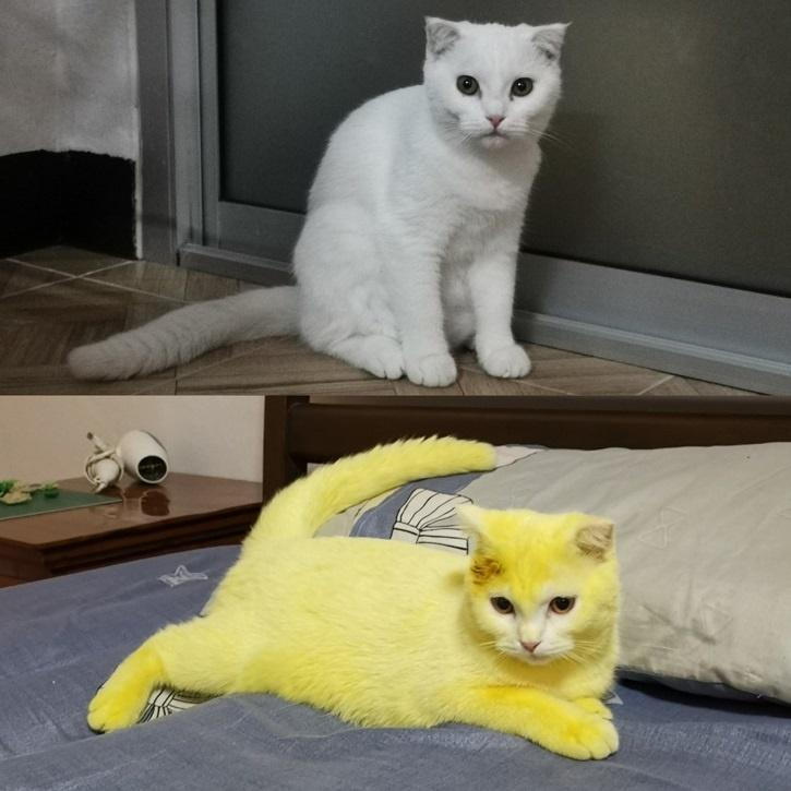علاج فطريات القطط بالاعشاب