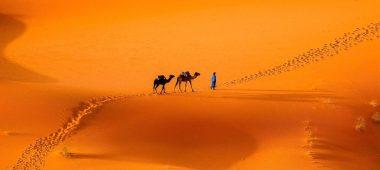 البيئة الصحراوية في مصر