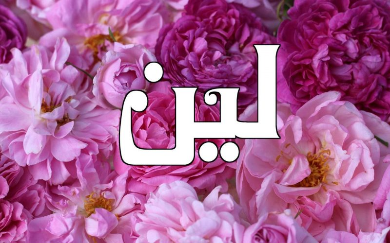 معنى اسم لين في الاسلام وصفات شخصيتها في علم النفس دلع اسم لين معلومة