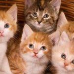 تفسير رؤية القطط في المنام للحامل
